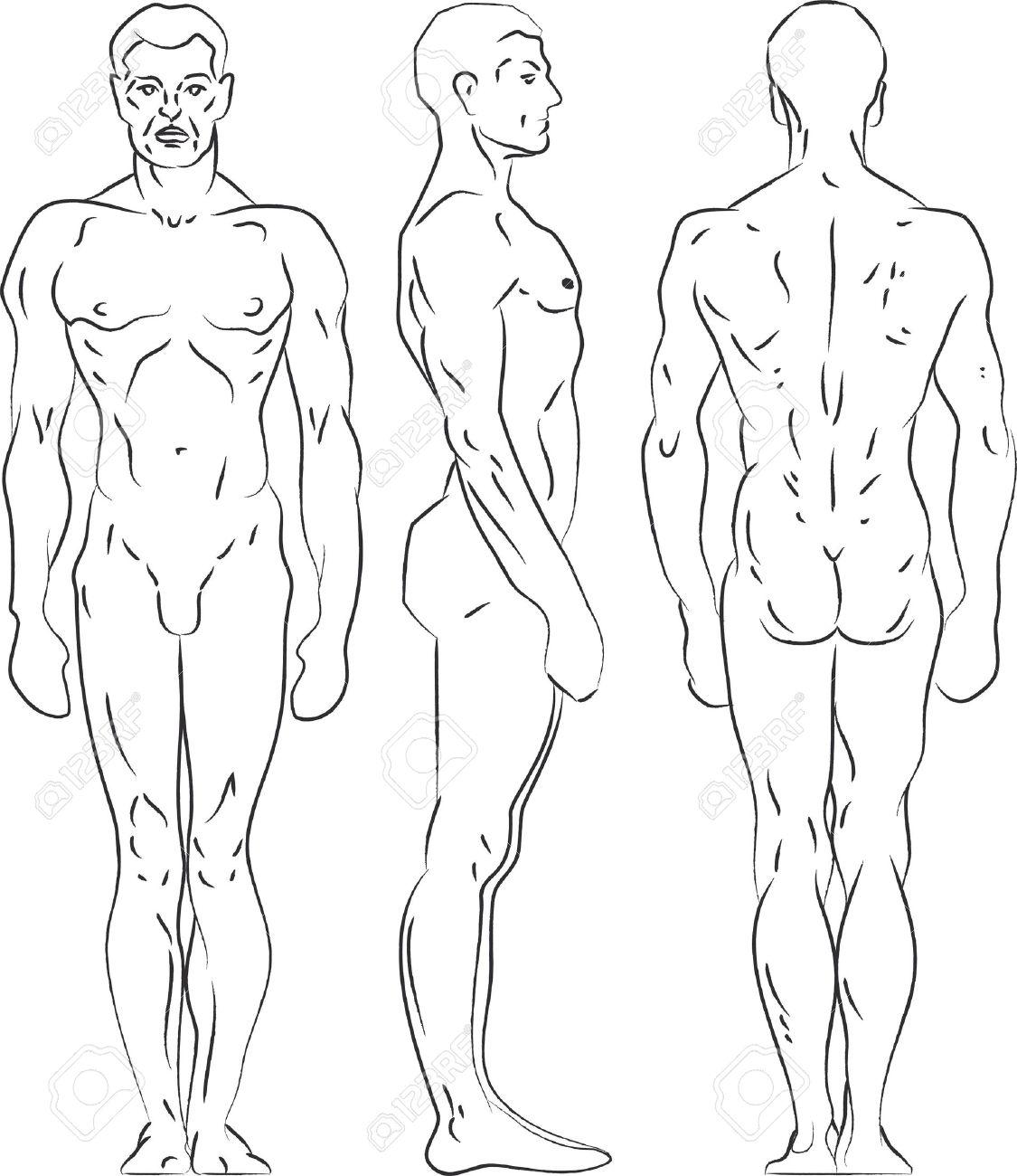 1125x1300 Contour Illustration Male Figure. Profile, Frontal, Rear View