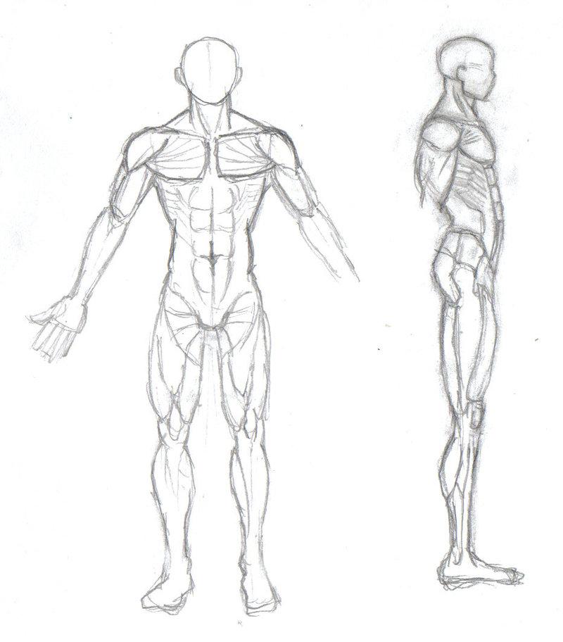 800x912 Human Body Sketch By Mmawolf