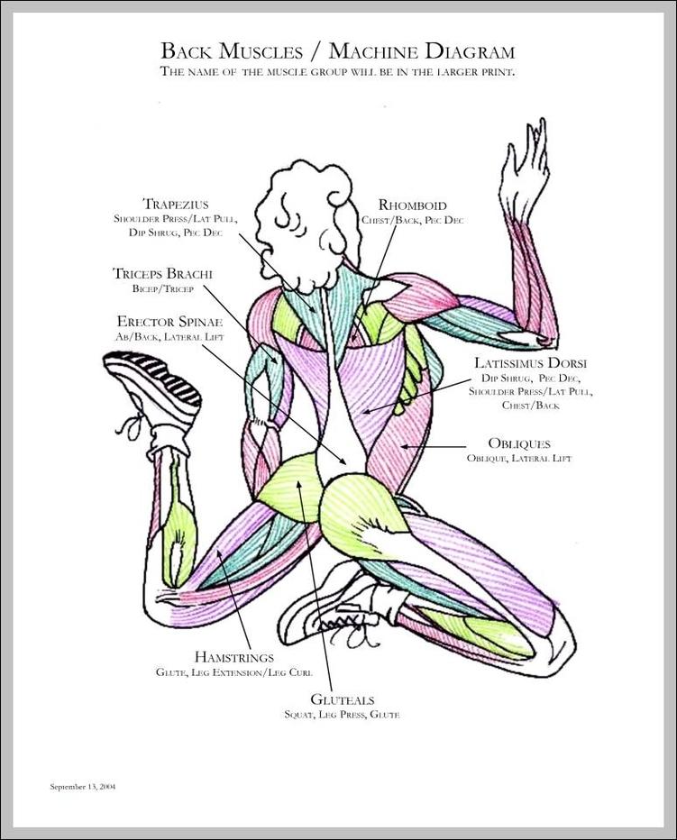 Human Muscles Drawing At Getdrawings Com