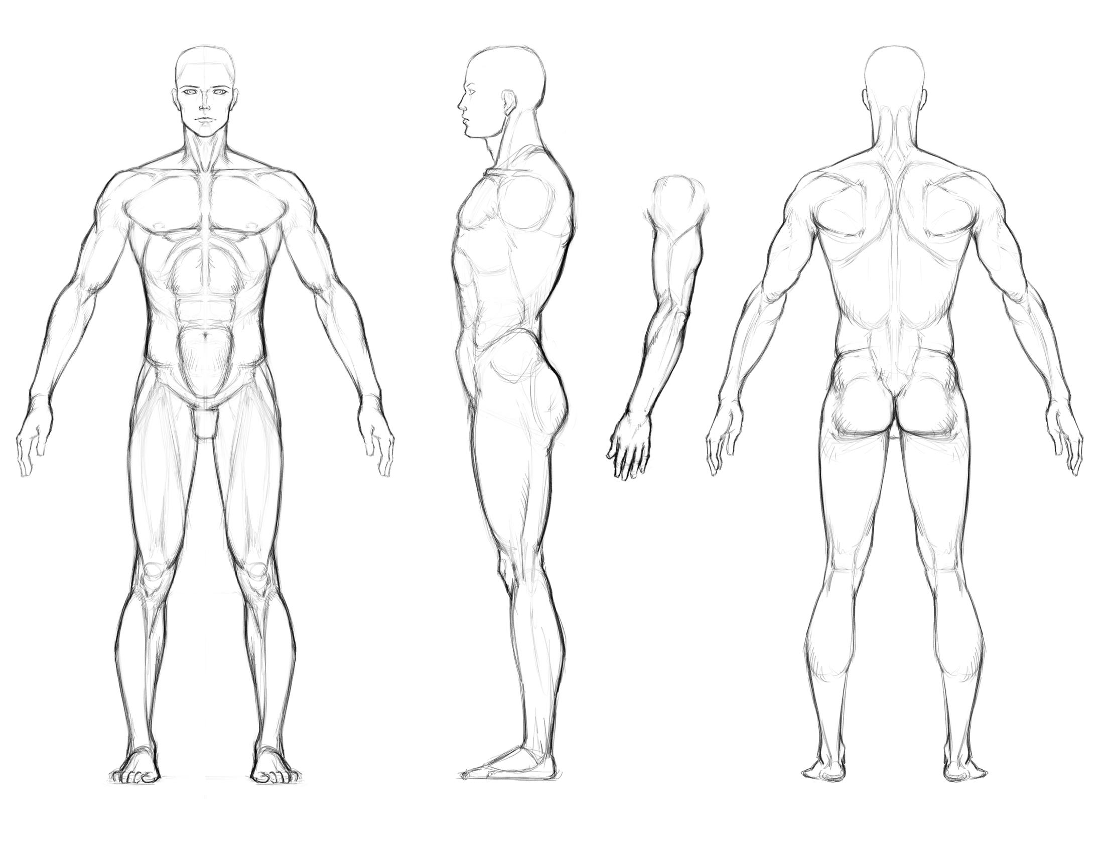 2212x1710 Art Reference. Turnaround Sheet. Muscular Man Drawing Photobucket