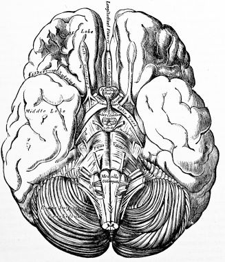 327x380 Anatomi Organlar 15 Anatomy Organs 15 Find Us On Gt Httpswww