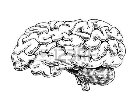 450x360 Human Biology, Organs Anatomy Illustration. Engraved Hand Drawn