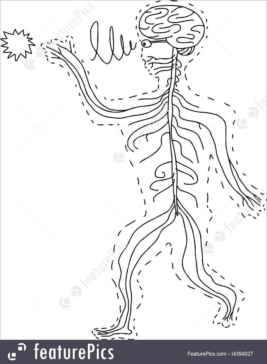 Human Organs Drawing at GetDrawings.com | Free for personal use ...