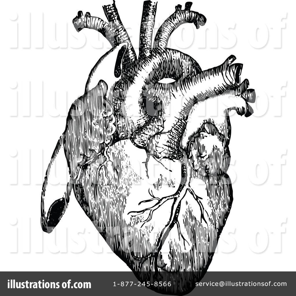 1024x1024 Organs Clipart Anatomical Heart
