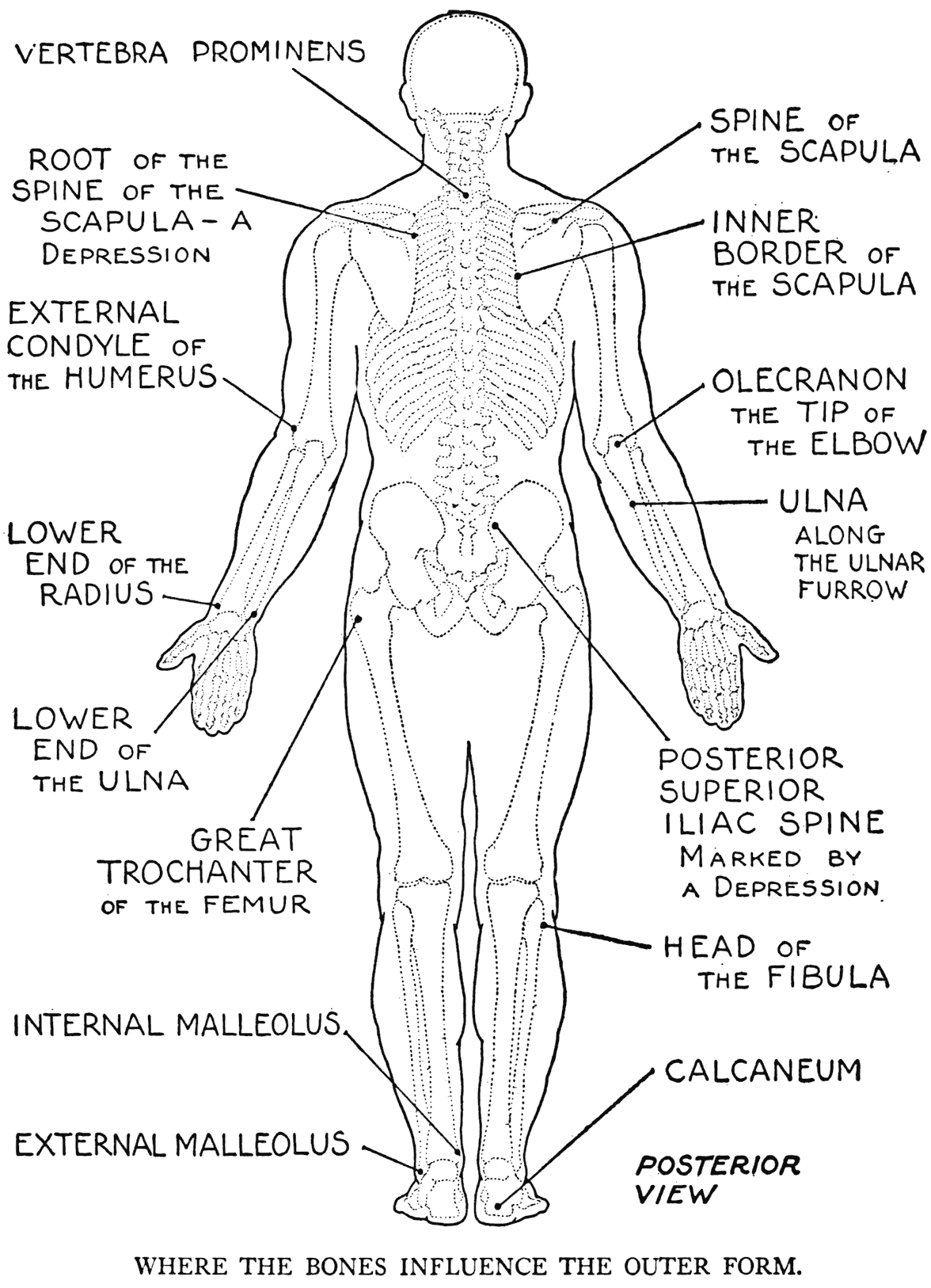 Human organs drawing at getdrawings free for personal use 1176x1626 practical art anatomy ccuart Images