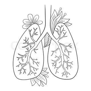 320x320 Vector Illustration Of Lungs. Doodle Drawing Of Human Organ