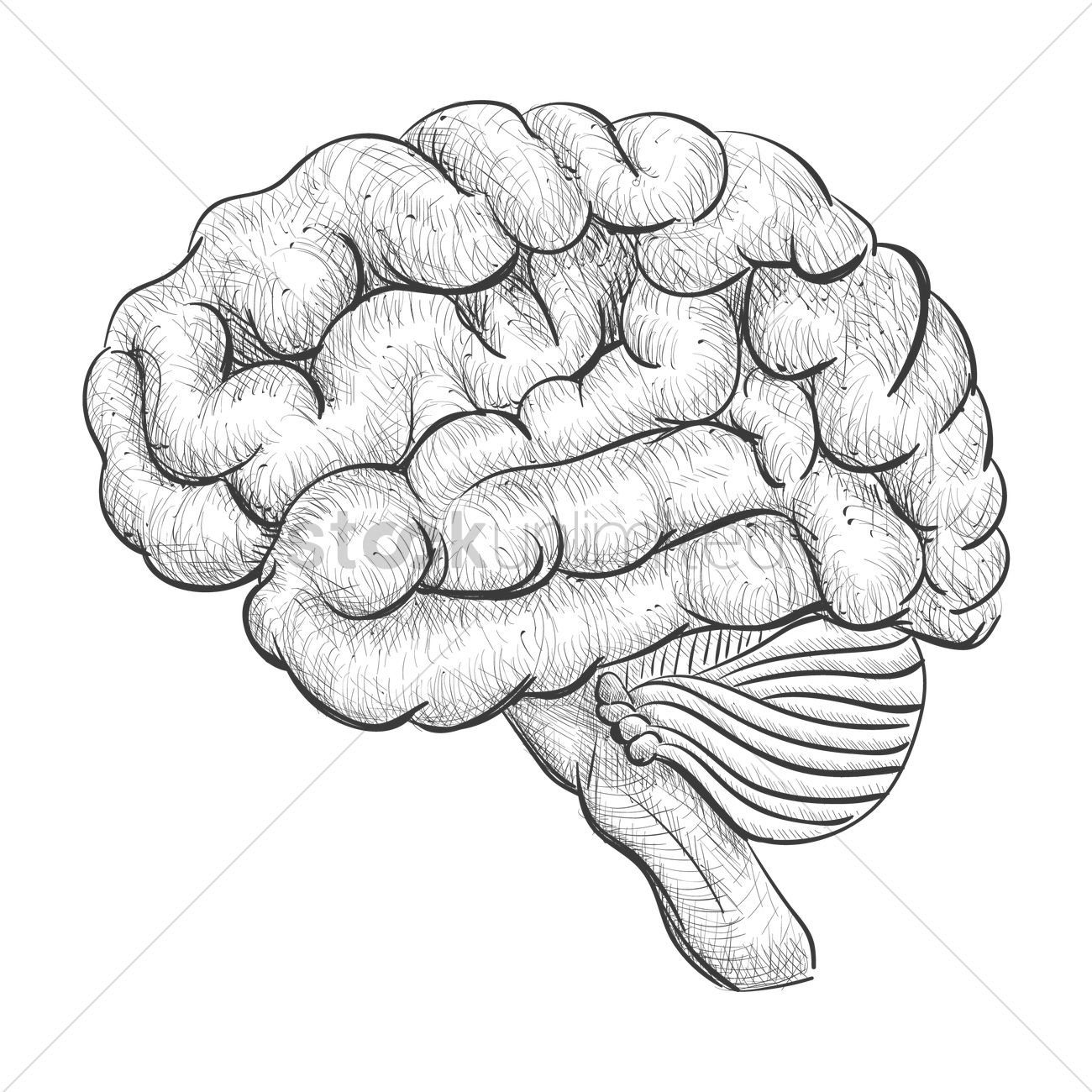 1300x1300 Brain Vector Image