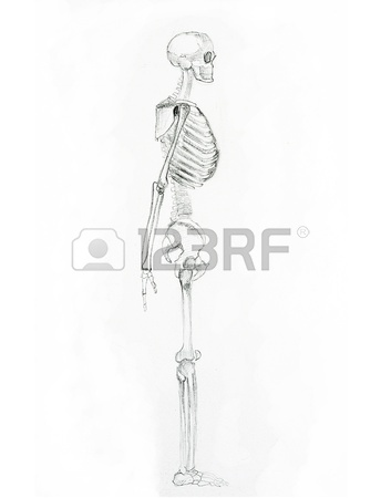 344x450 Pencil Sketch A Skeleton Stock Photo, Picture And Royalty Free