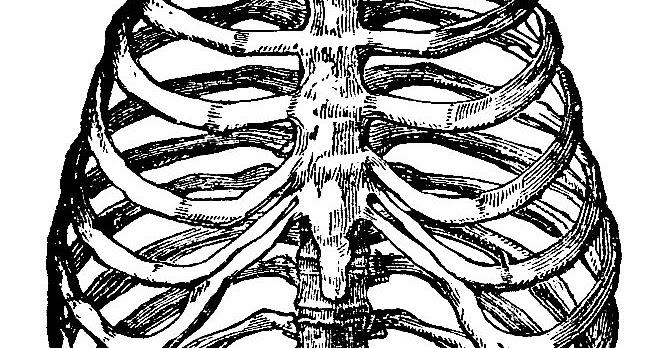 663x348 Digital Stamp Design Free Skeleton Digital Stamp Vintage