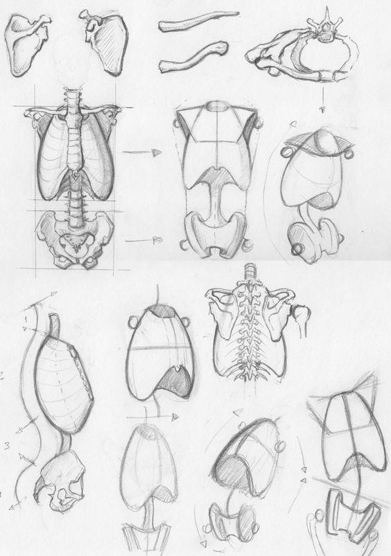 564x802 Resultado De Imagen Para Anatomy References Drawing Dibujo
