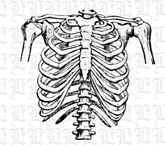 570x500 Rib Cage Clipart Black And White