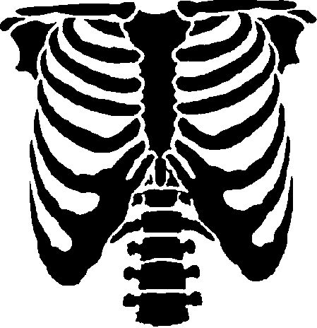 449x464 The Design A Human Rib Cage Great For Halloween Events And Scaring