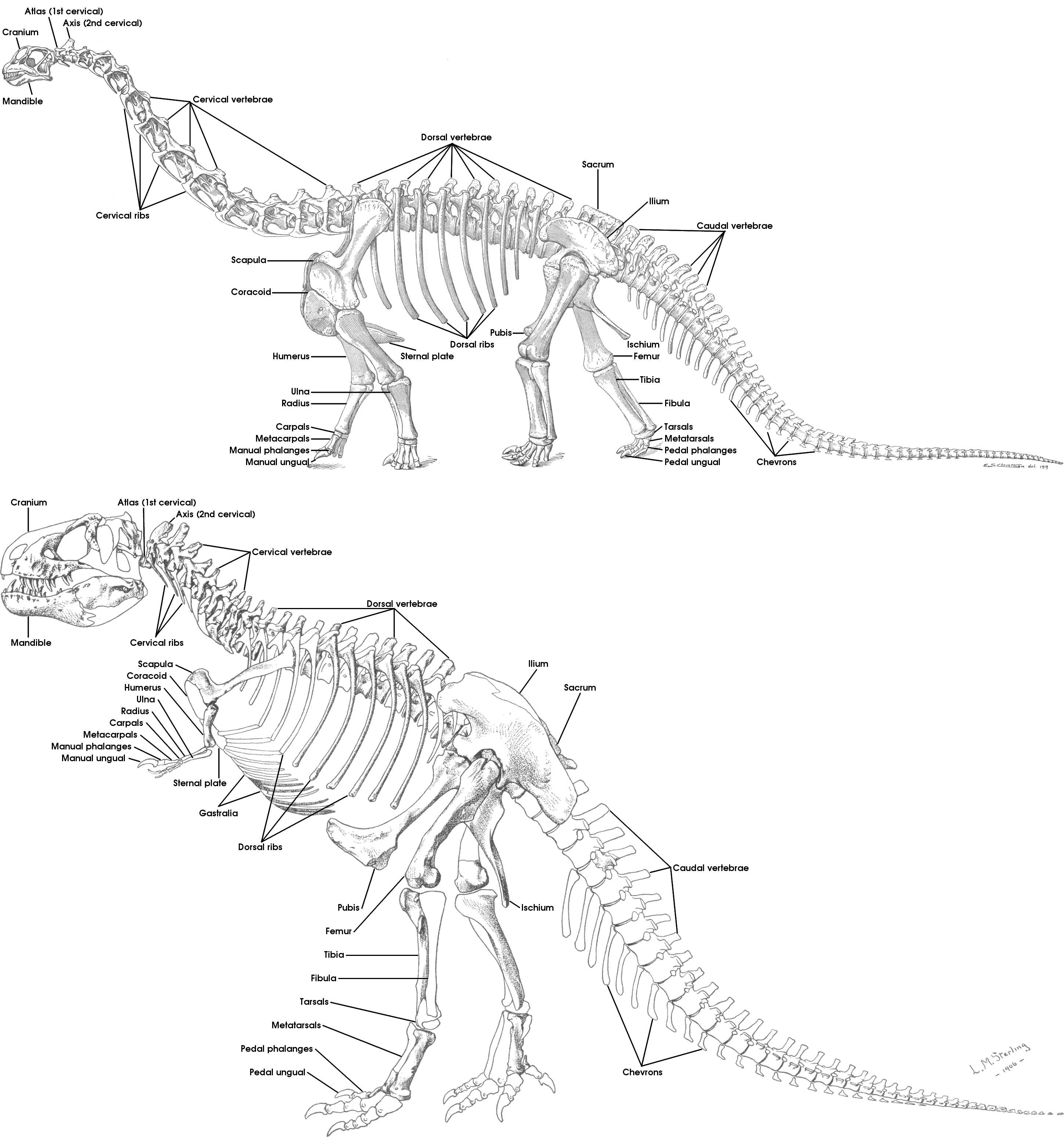 2897x3095 Geol 104 Fc Anatomy Amp Taxonomy