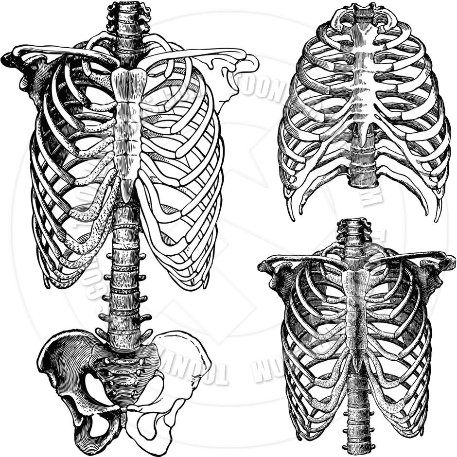 940x940 Bones On Chest Of Human Skeleton Rotation Of 3d Skeleton.ribs