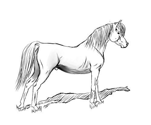 499x414 Live Laugh Ride How To Draw An Arabian Horse
