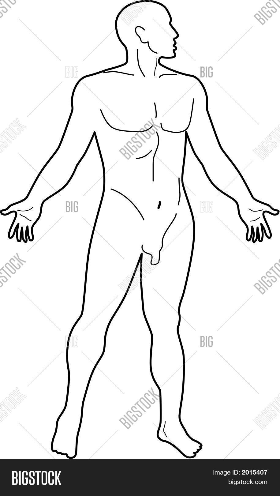 915x1620 Human Anatomy Silhouette Vector Amp Photo Bigstock