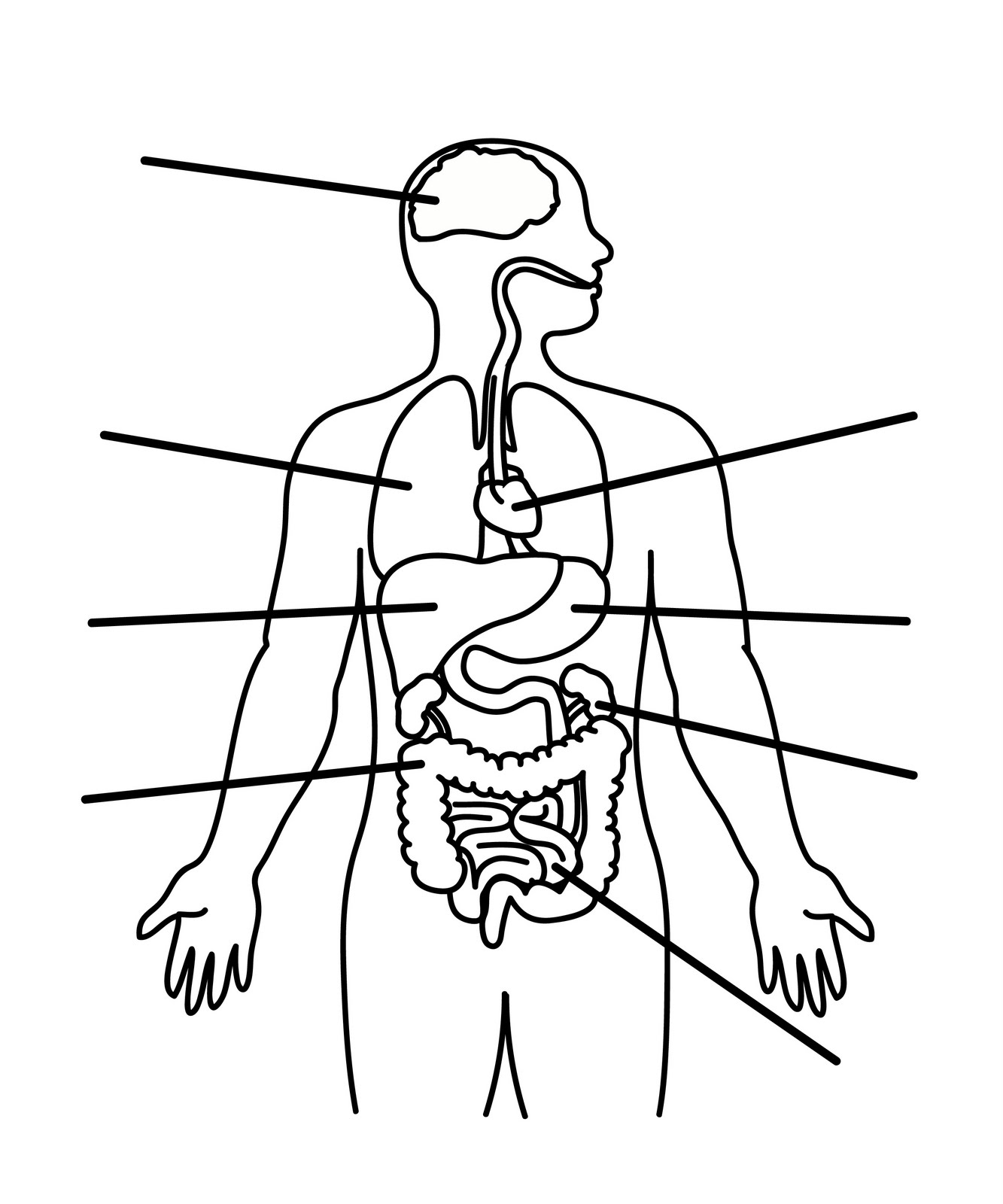 1333x1600 Human Body Outline Printable