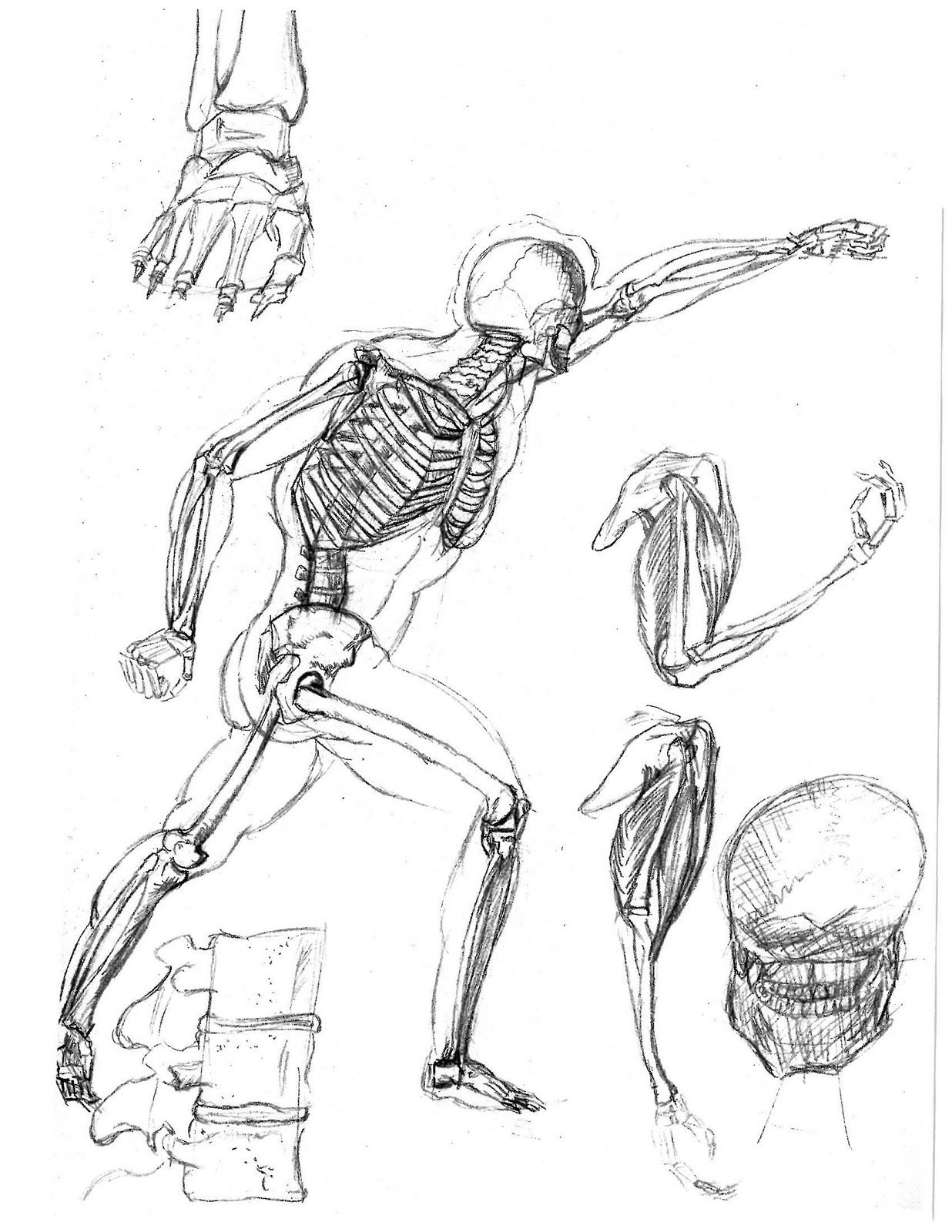 Human Skeletal System Drawing
