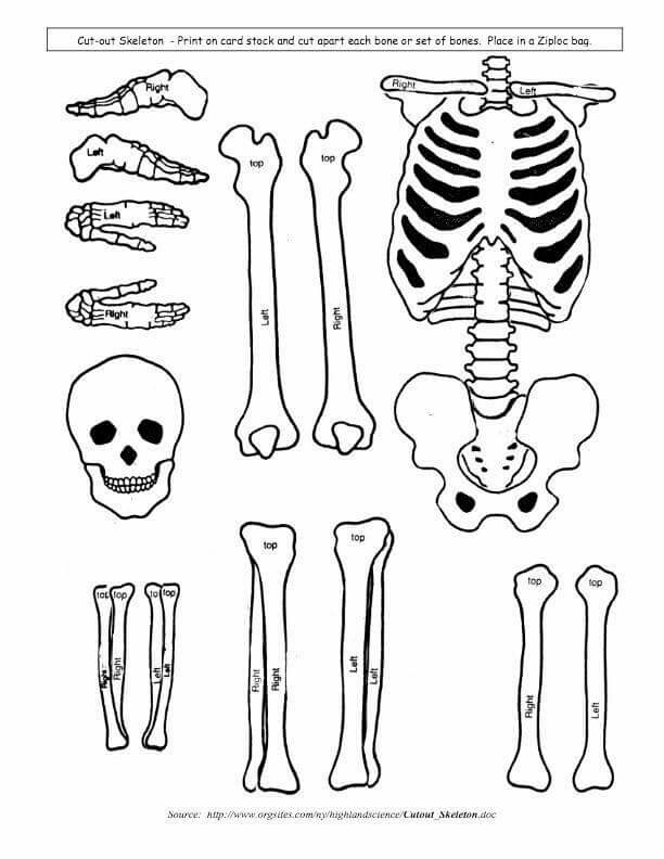 Human Skeletal System Drawing At Getdrawings Free For Personal