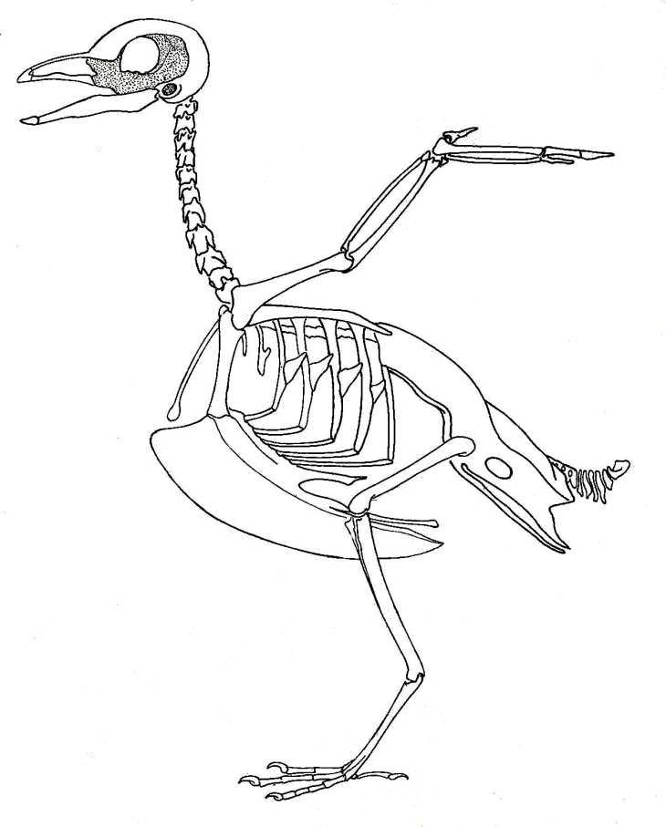 730x907 Human Skeleton Bones Labeled Image Oesm
