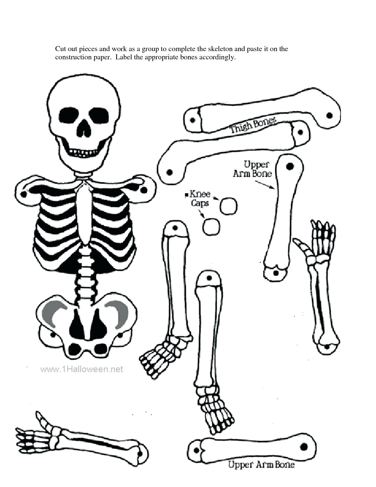 image about Printable Human Skeleton identify Human Skeletal Approach Drawing at  Totally free for