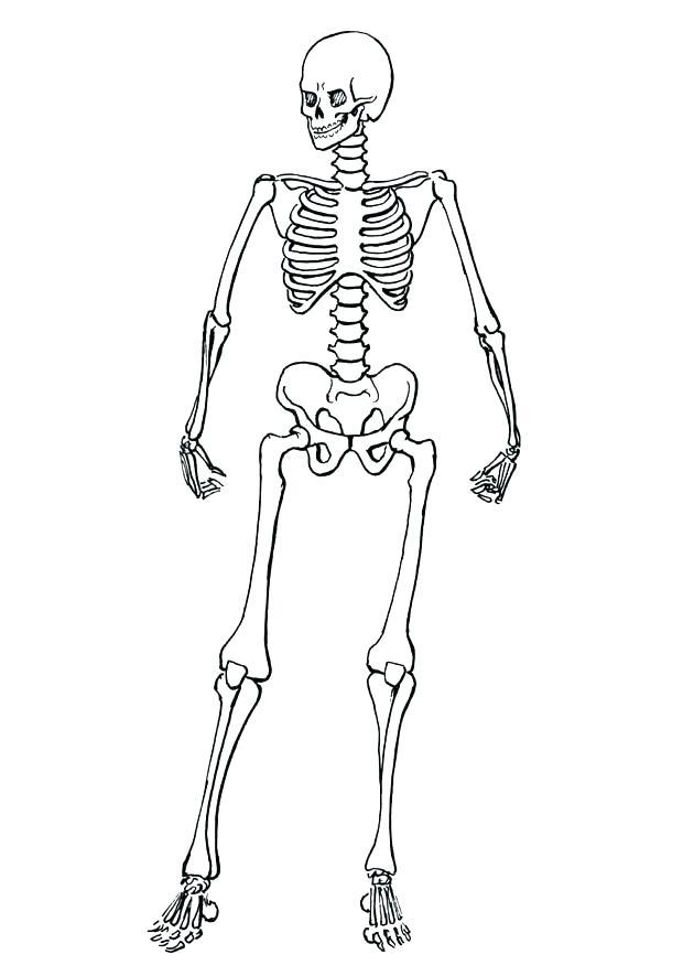 620x875 Human Skeleton Coloring Page Free Printable Skeleton Coloring