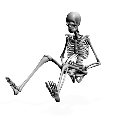 400x408 Human Skeleton Fifteen Isolated Stock Photo By