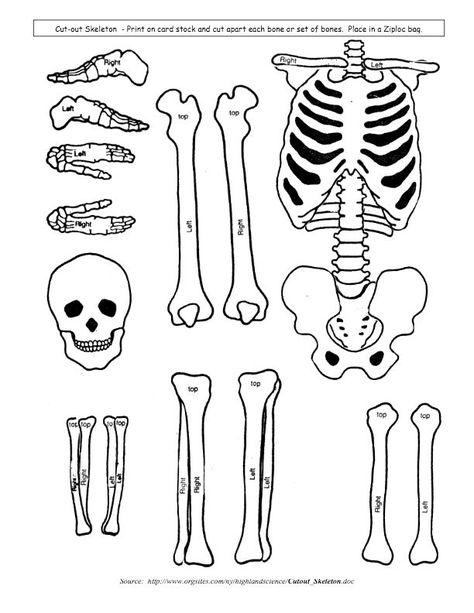 474x613 Make A Paper Skeleton To Label Bones School