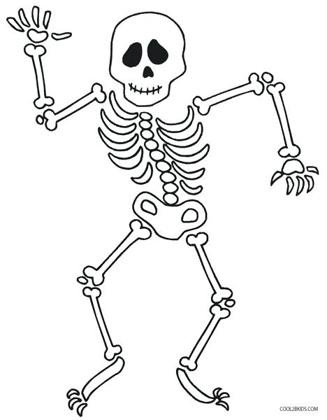 how to draw human bones