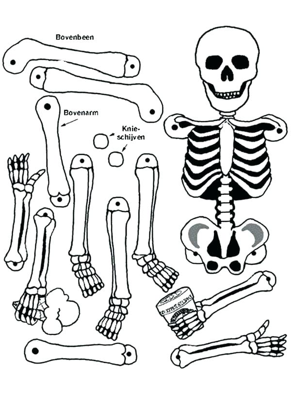 600x848 Skeletons Coloring Pages Skeleton Color Page Skeleton Of A Great