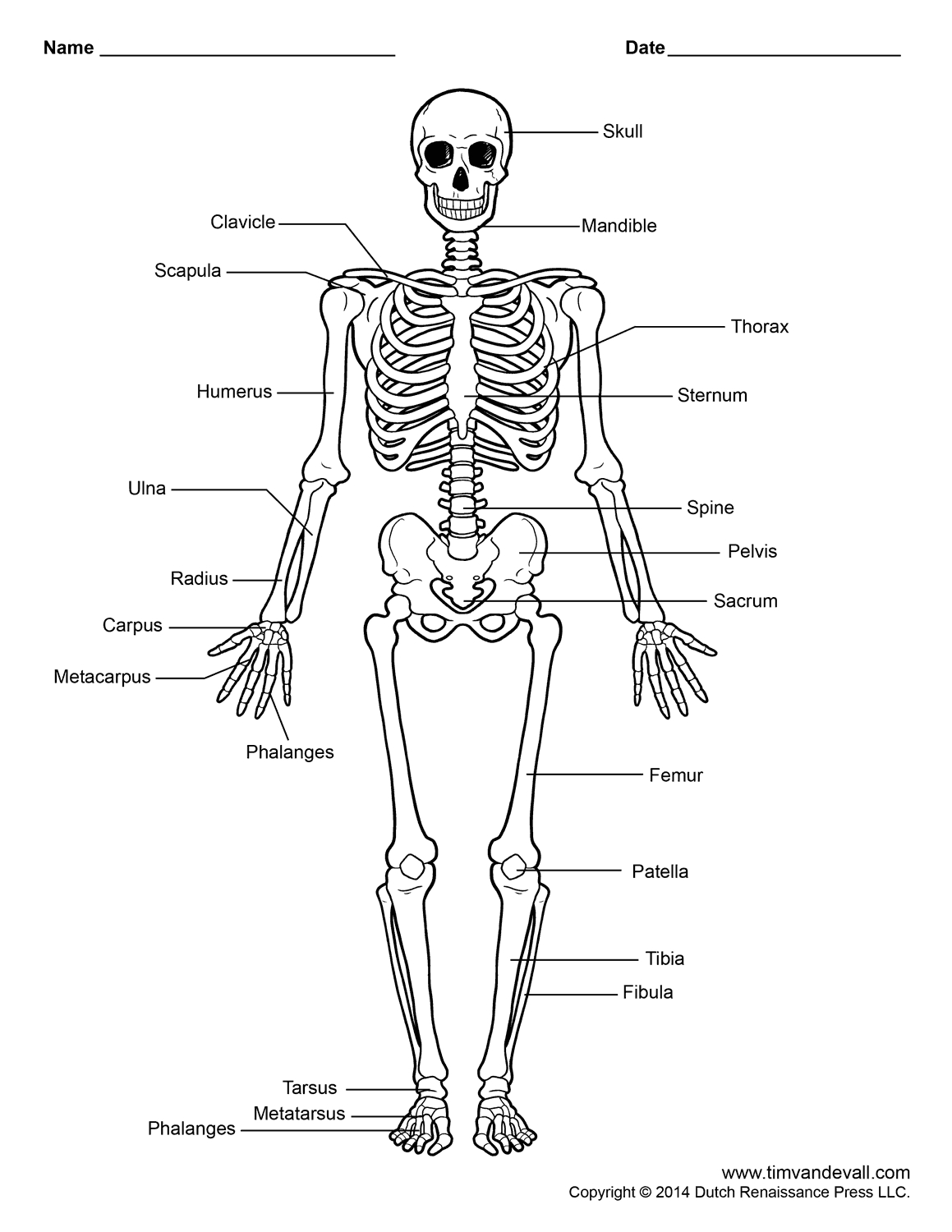 1159x1500 The Human Skeleton Posterior View And Anterior View
