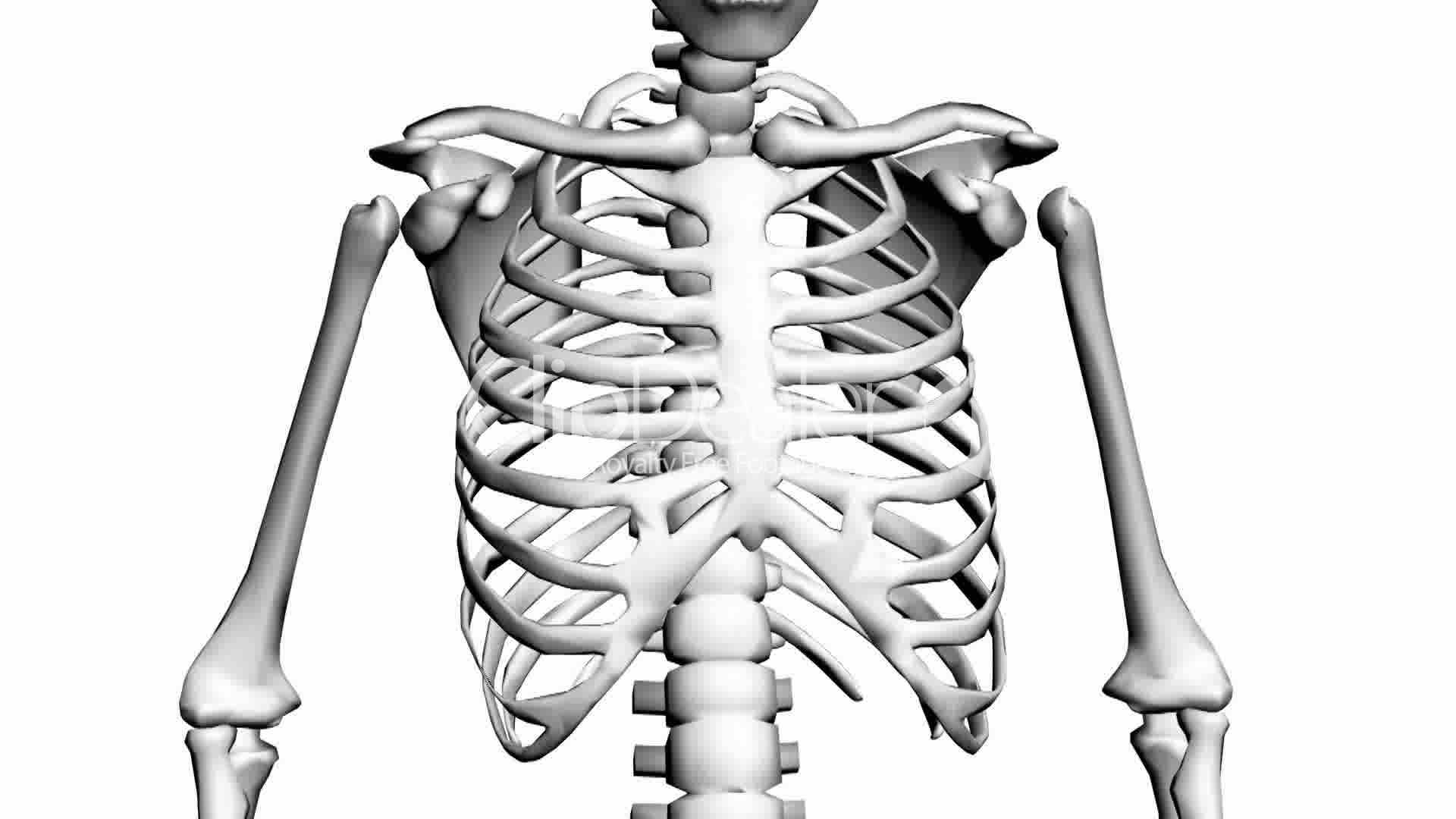 Human Skeleton Drawing at GetDrawings.com   Free for personal use ...