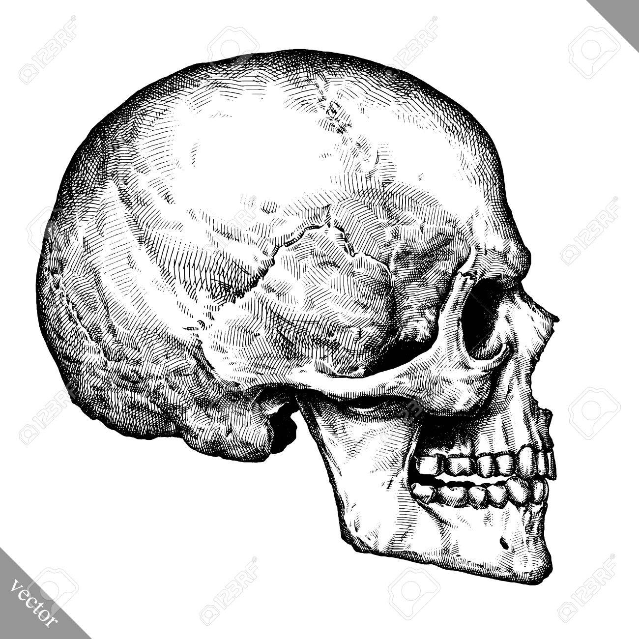 1300x1300 Engrave Isolated Human Skull Hand Drawn Graphic Vector