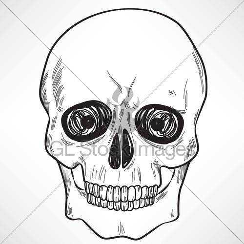 500x500 Human Skull Gl Stock Images