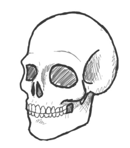 436x496 Simple Human Skull Drawing