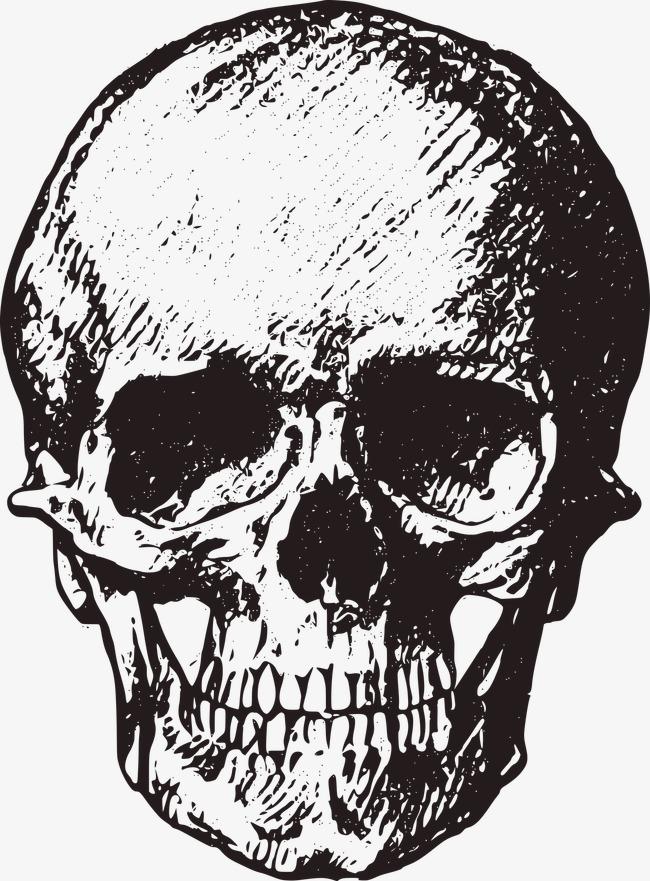 650x881 Sketch Skull, Sketch, Human Skeleton, Skull Png Image For Free