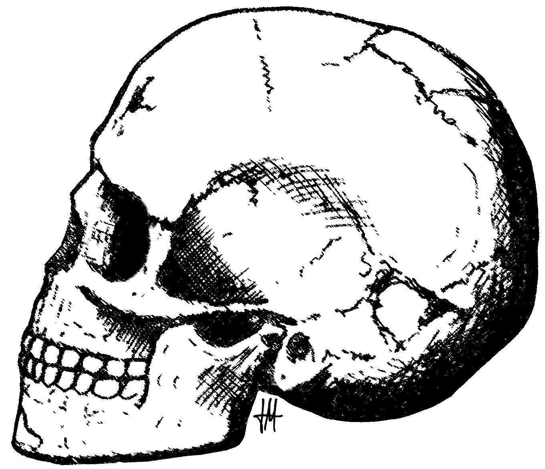 1360x1168 Human Skull