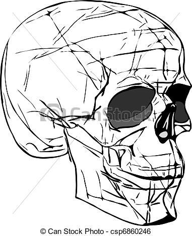 381x470 Human Skull Line Drawing
