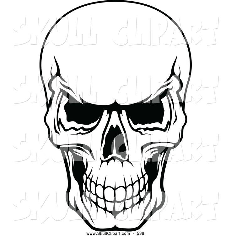 Human Skull Drawing Reference