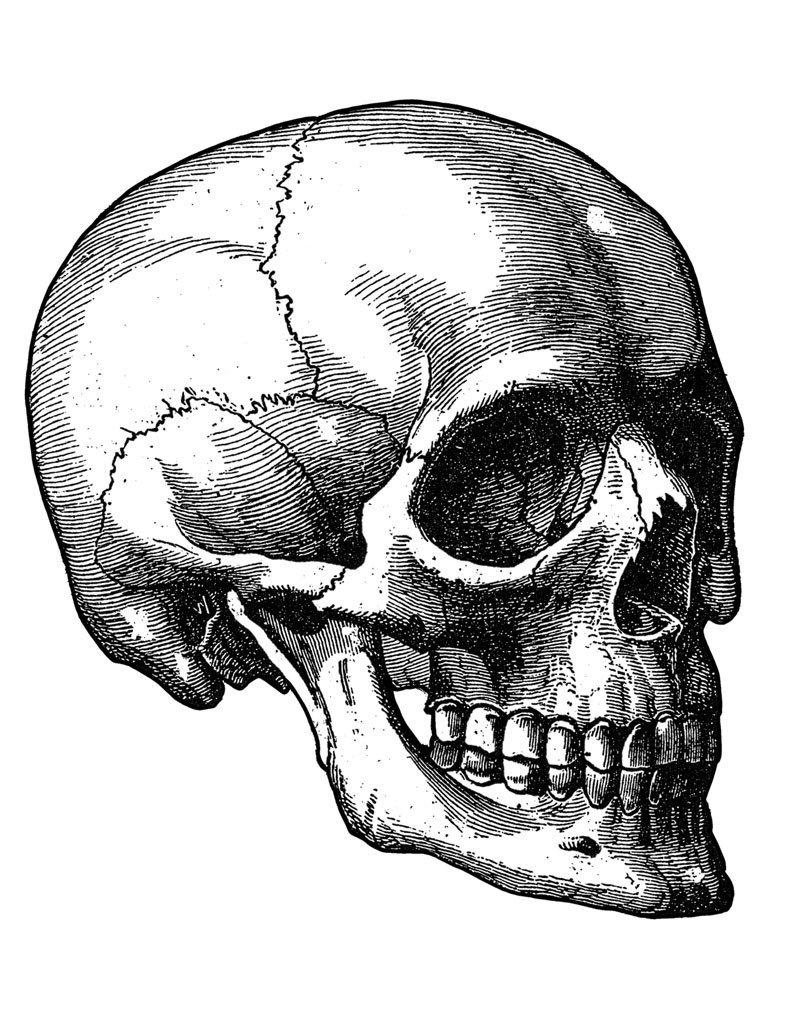 791x1024 Engraved Skulls Ebook