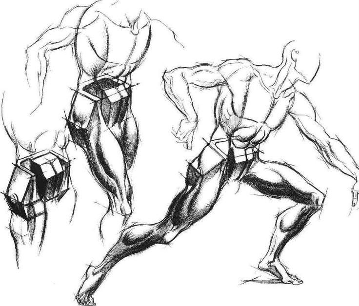 736x628 30 Best Burne Hogarth Amp Anatomy Images On Drawing