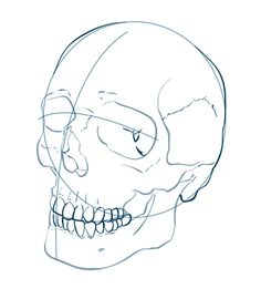236x270 How To Draw A Human Skull Step By Step. Drawing Tutorials For Kids