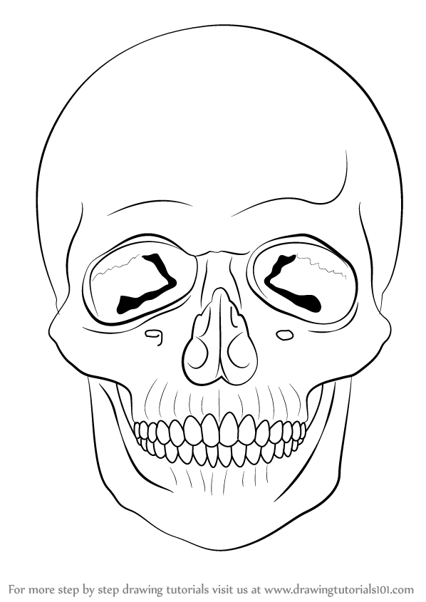 598x845 Learn How To Draw A Skull (Skulls) Step By Step Drawing Tutorials