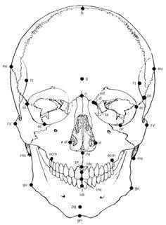 236x321 Scott Eaton Anatomy Tutorial Forensic Anatomy References Face