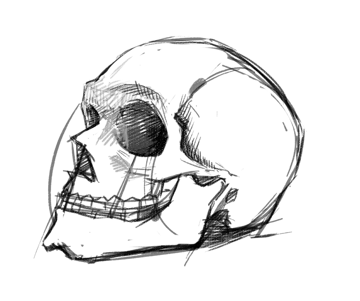 Human Skull Drawing Tutorial at GetDrawings.com | Free for personal ...