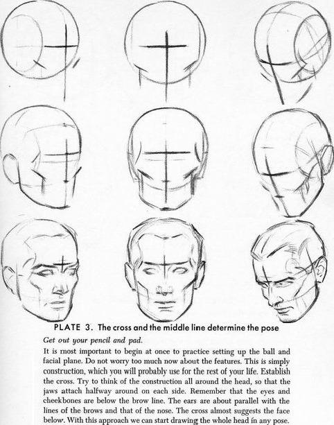 482x613 Drawing Art Head Draw Skull View Human Anatomy Turn Direction