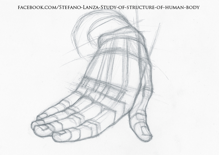 756x534 Lanza Study Of Structure Of Human
