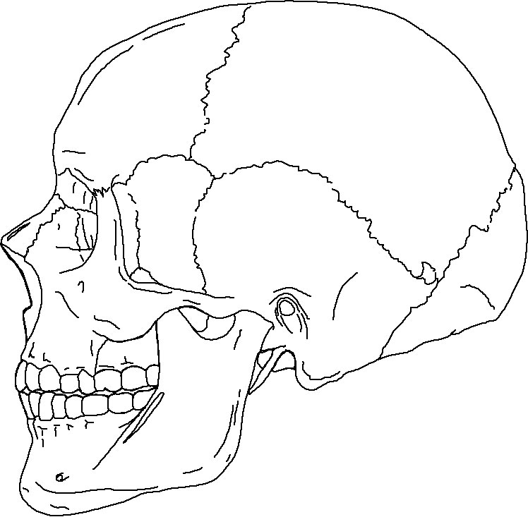 skull bones coloring pages - human skull line drawing at free for