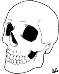 205x258 Drawn Skull Line Art