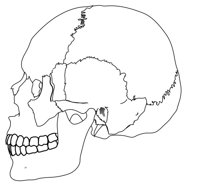 662x600 Filehuman Skull Nocolors.svg